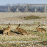 Orford Ness National Nature Reserve